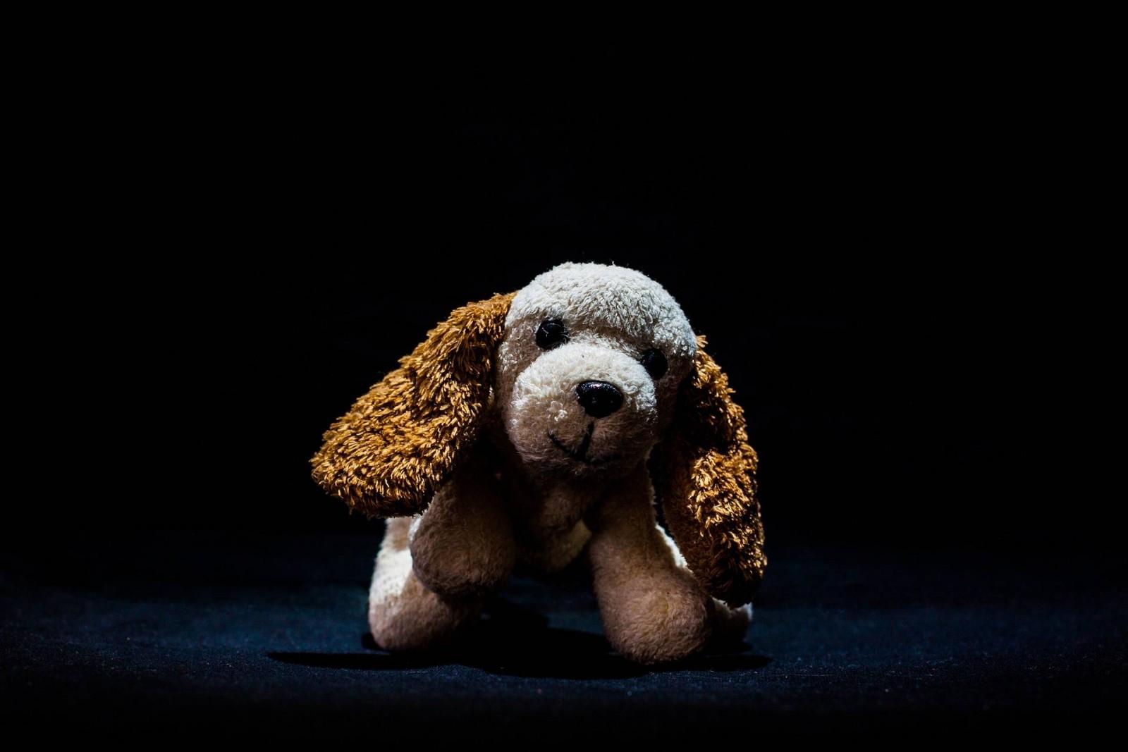 teddy-bear-933159_1920
